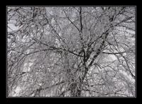 nebelgrenze04.jpg