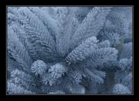 nebelgrenze06.jpg