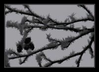 nebelgrenze07.jpg