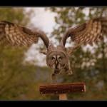 falconeria03