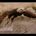 falconeria06