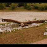 falconeria08