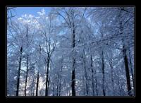 bei minus 18 grad auf dem uetliberg