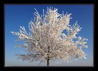 uetliberg bei minus 18 grad